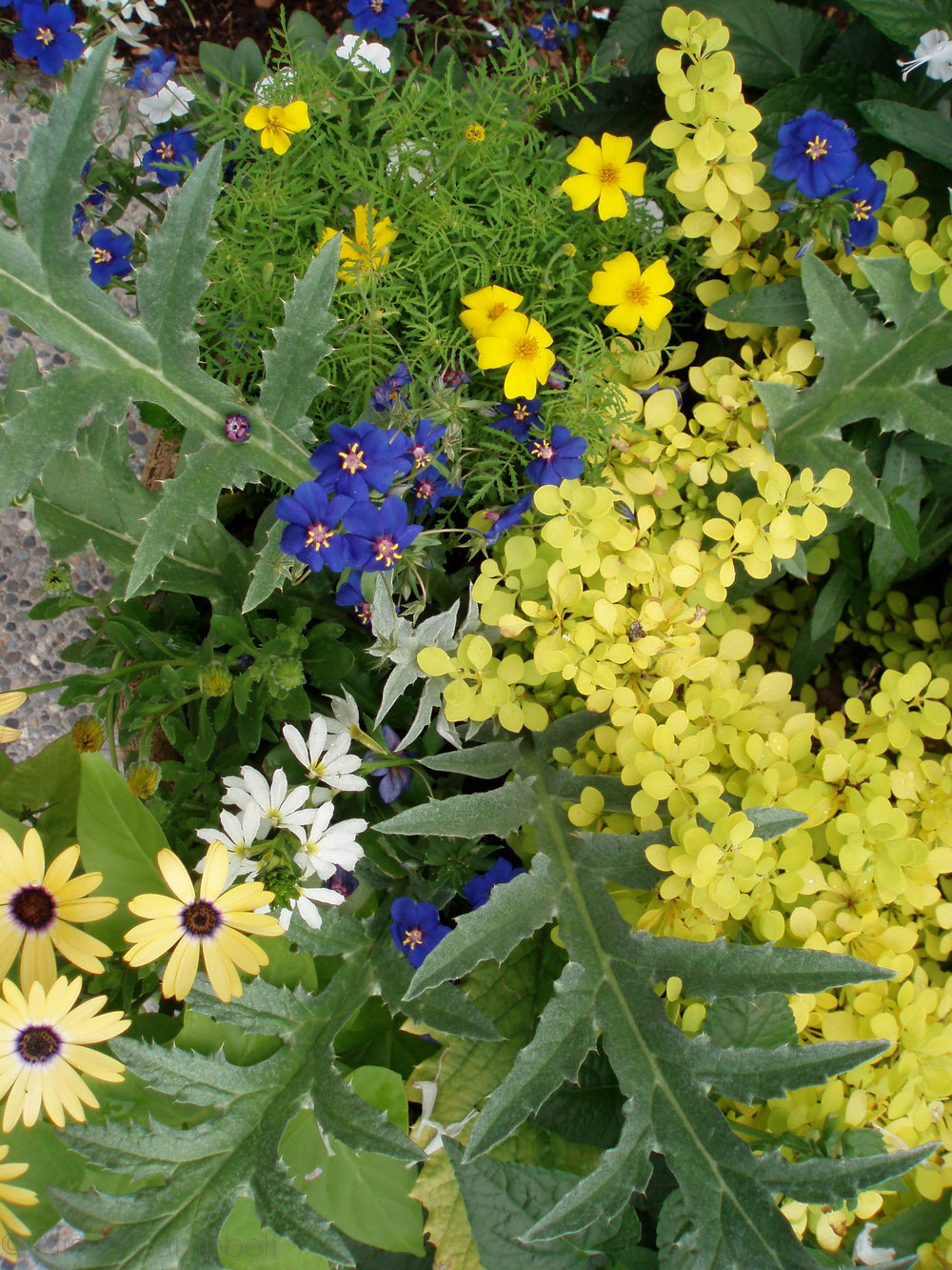 blue and yellow close up.jpg