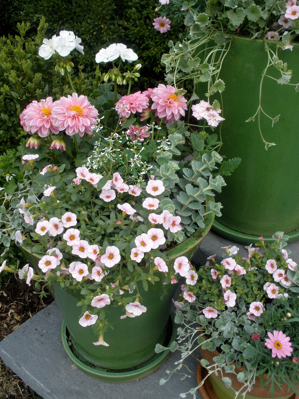 pink and green pots.jpg