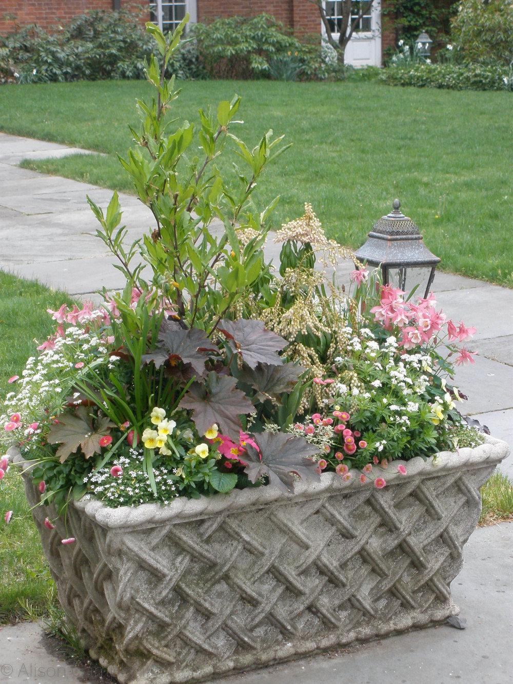 spring garden pot.jpg