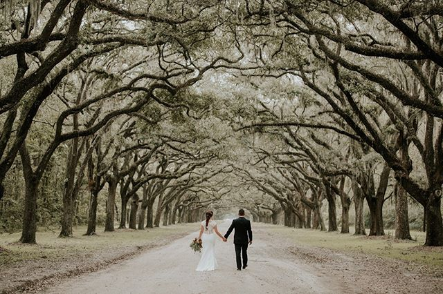 Take me back to Savannah 😍😭 Shot while working for @aliciawhitephoto ✨#amorevitaphotos