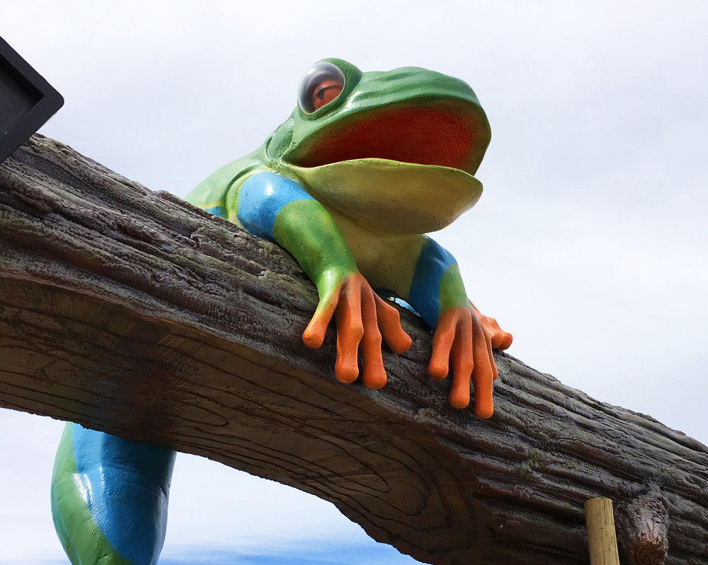 Welcome Frog Friends!