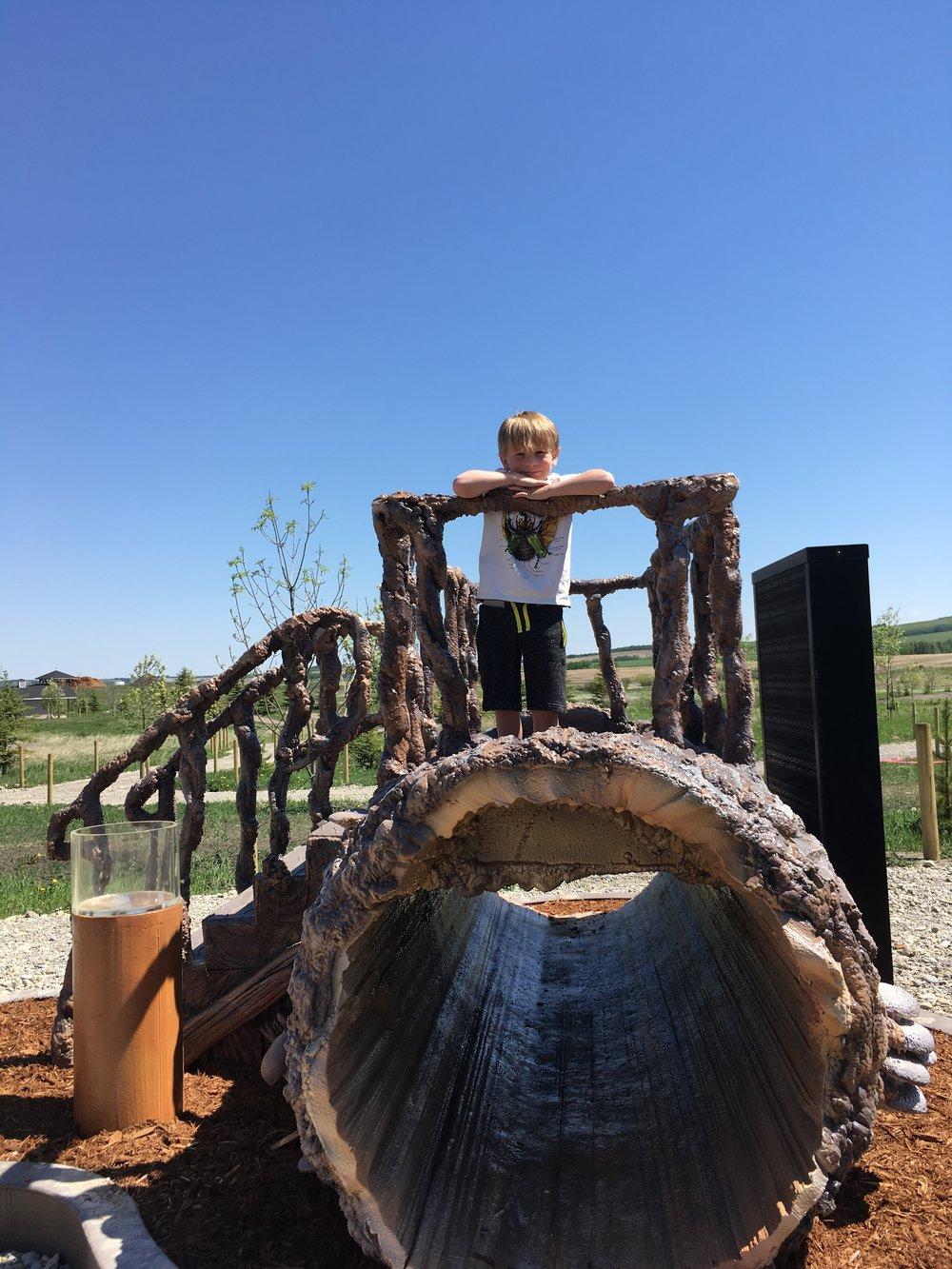 Life on a Log!