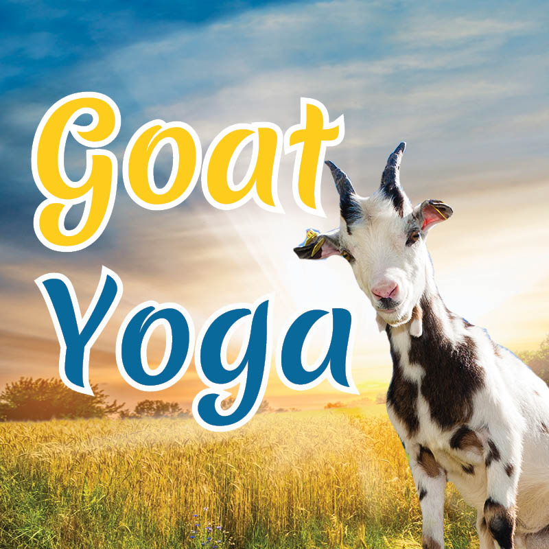 Goat Yoga | Sunday, June 24th, July 8th & 22nd