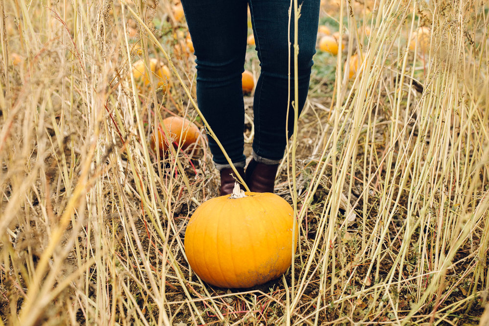 pumpkinpatch-24.jpg