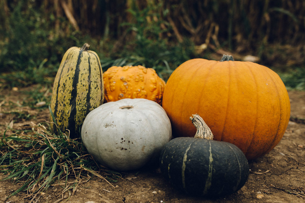 pumpkinpatch-53.jpg
