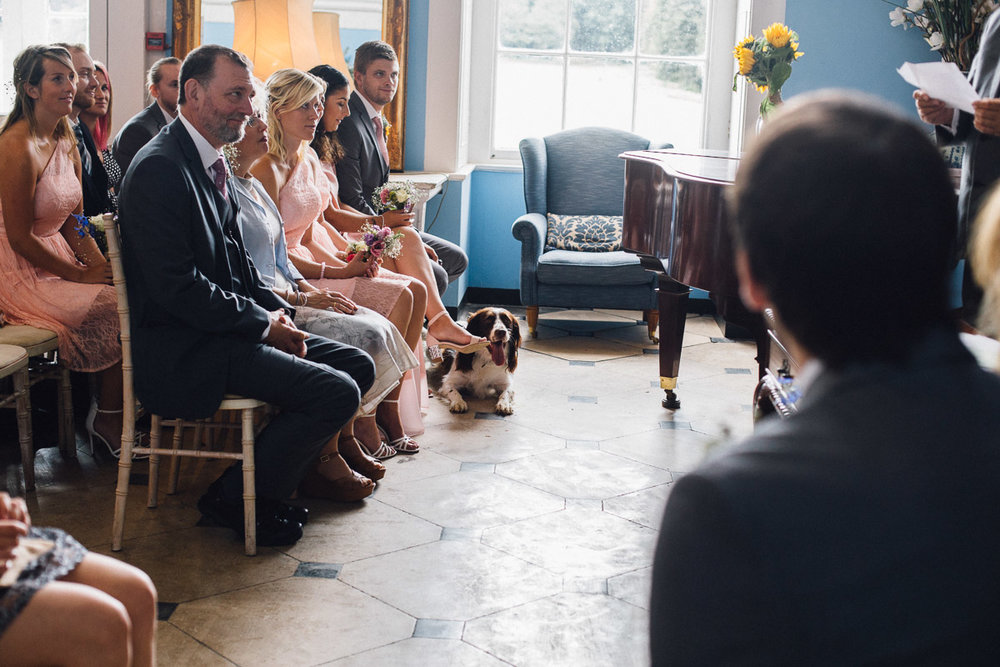 Dog Watching During Wedding Ceremony