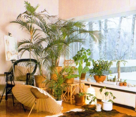 Indoor-Plants-For-A-South-facing-Window