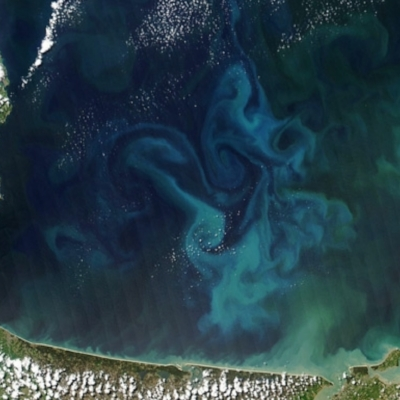 The ocean's plants (phytoplankton) produce over half of the oxygen we breathe in every breath.That's more than every tree in every forest, worldwide, combined