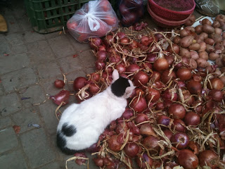 cat+and+onions.jpg