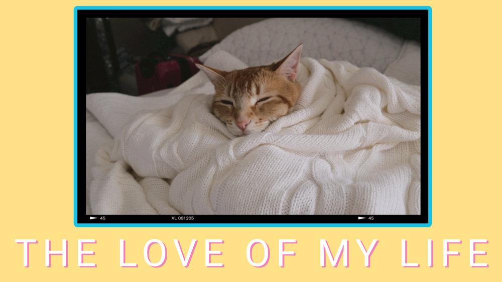 cat thumbnail.jpg