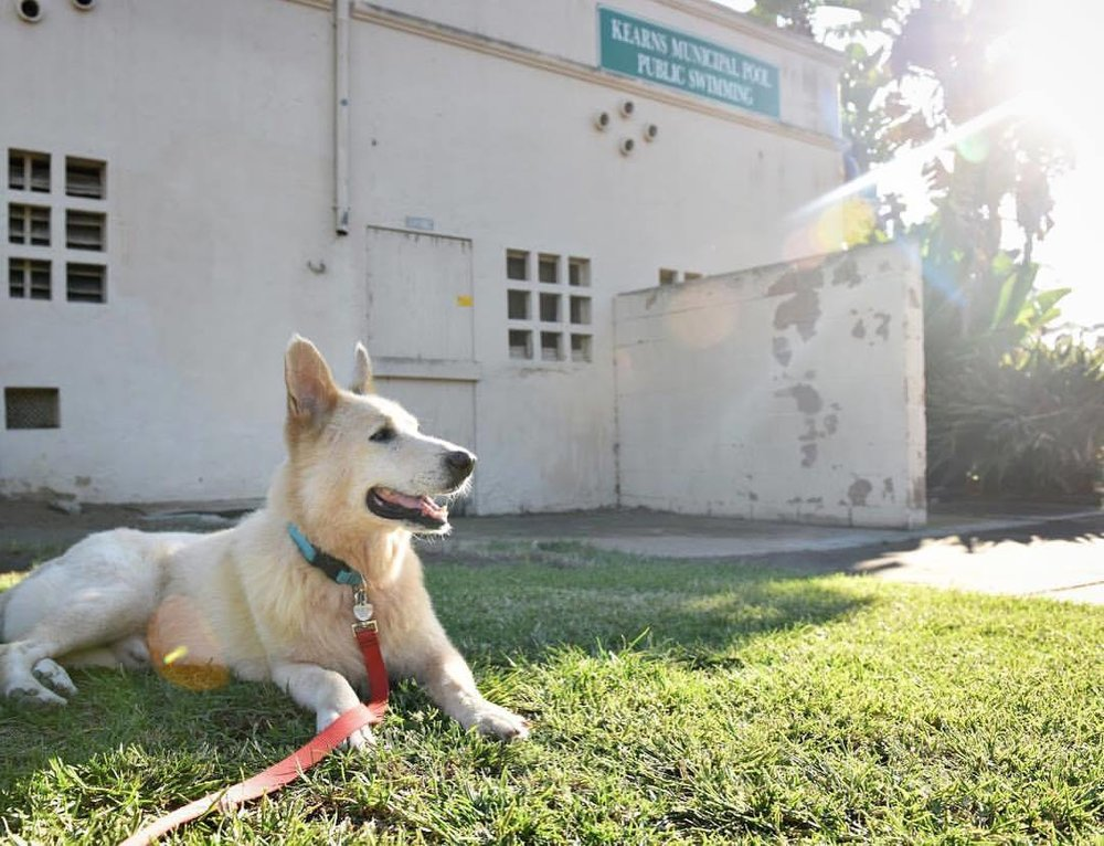 Meet Benson - Adoption pending.