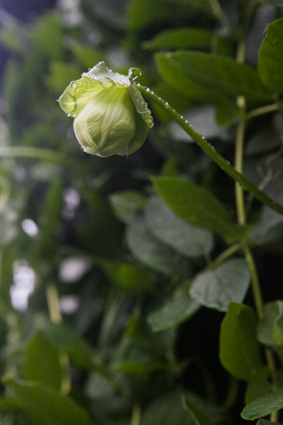 PlantProfile-3719.jpg