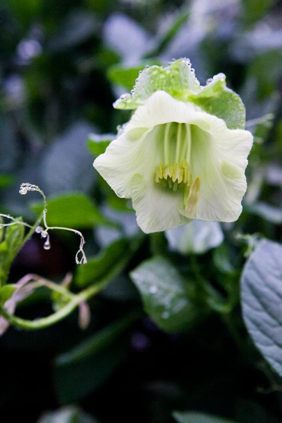 PlantProfile-3710.jpg