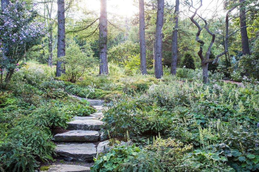 Jedlicka-Native-Garden-1-WB-6178497.jpg