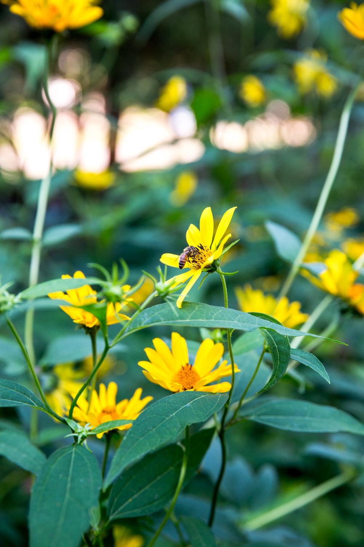 Jedlicka-Native-Garden-29-WB-6178497.jpg