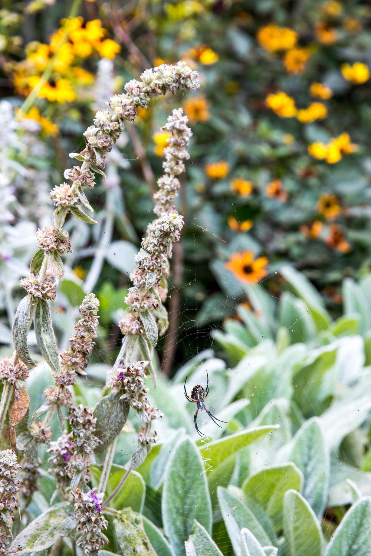 Jedlicka-Native-Garden-35-WB-6178497.jpg