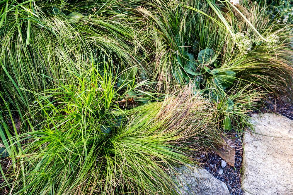 Jedlicka-Native-Garden-37-WB-6178497.jpg