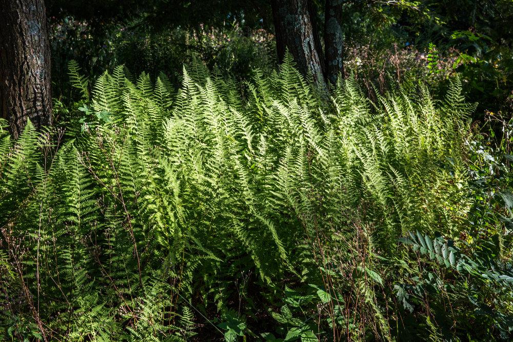 Jedlicka-Native-Garden-49-WB-6178497.jpg
