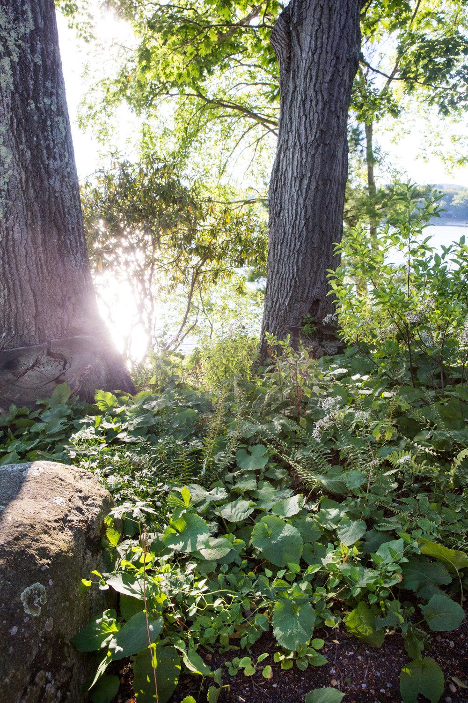 Jedlicka-Native-Garden-52-WB-6178497.jpg