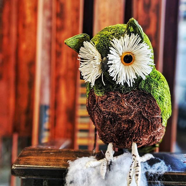 🎶I must admit I can't explain, All these thoughts racin' through my brain, it's true, Baby, I'm owlin' for you. 🎵 (With heartfelt apologies to @theblackkeys)  #pun #owl #blackkeys #chriwtmasdecorations