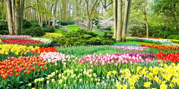 Flower-Garden-CS-117.jpg