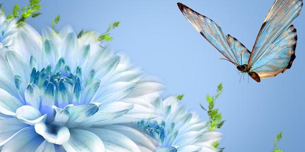Blue-Butterfly-CS-118.jpg