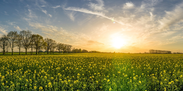 Floral-Sunset-CS-121.jpg