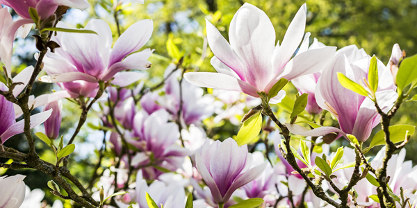 White-&-Purple-Floral-CS-123.jpg