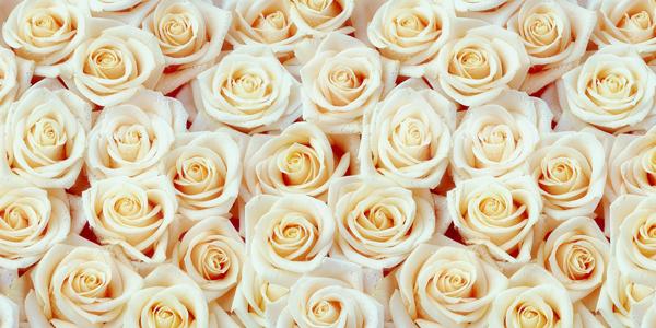 White-Roses-CS-124.jpg