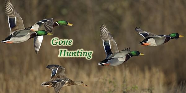 Gone-Hunting-Duck-CS-187.jpg