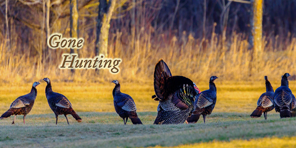 Gone-Hunting-Turkey-CS-188.jpg