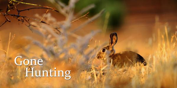 Gone-Hunting-Rabbit-CS-191.jpg