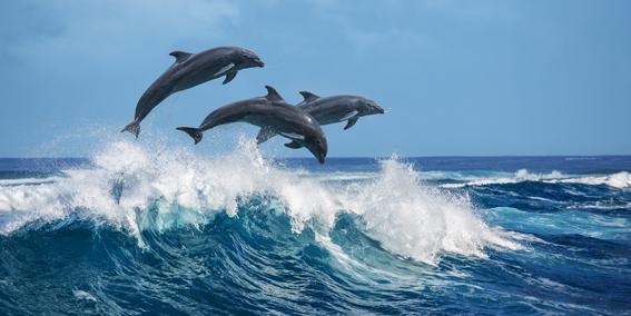 Dolphins-CS-194.jpg