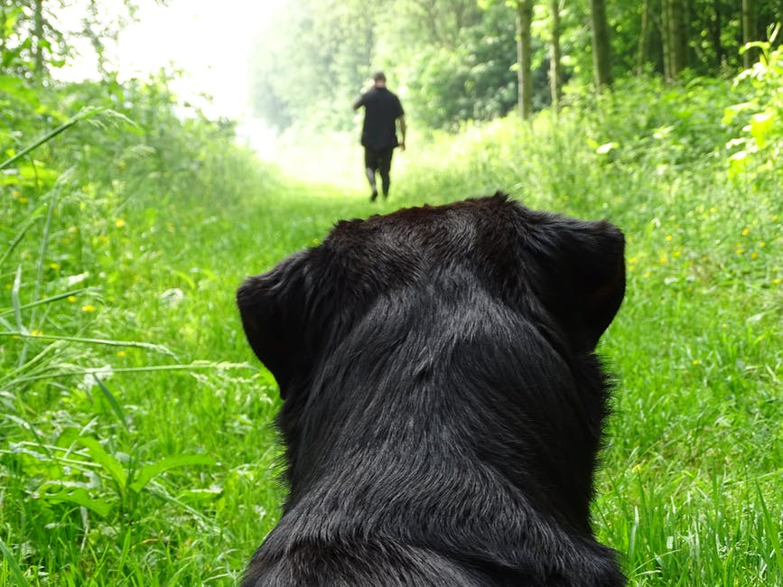 man on path with down stay dog.jpeg