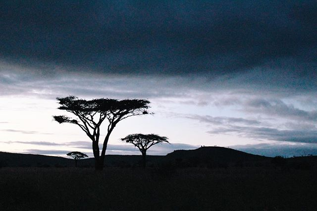 2nd most iconic type of tree. (U know the 1st.)