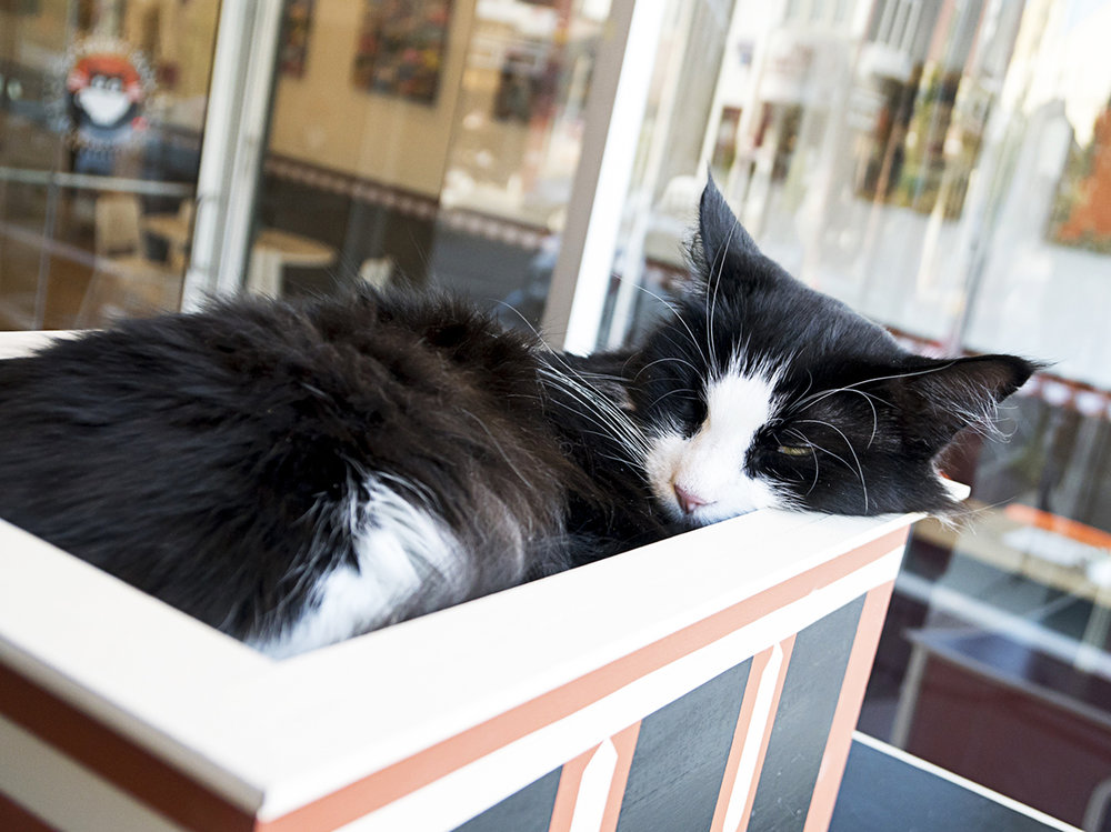 CatsburyPark-9.jpg