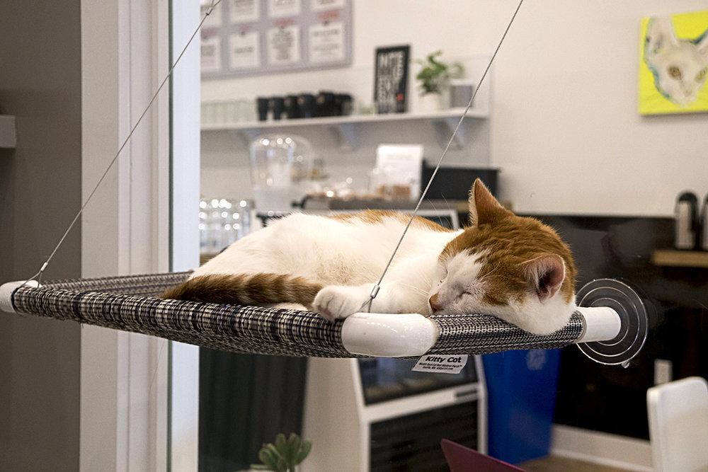CatsburyPark-6.jpg