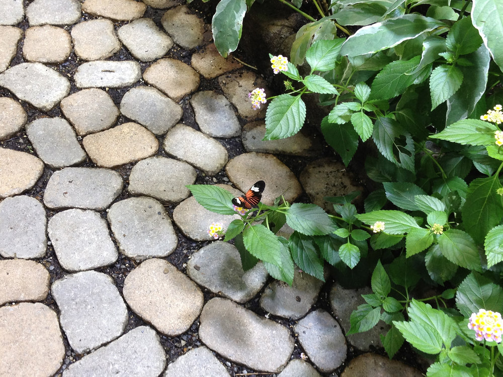 Professional butterflygarden planting landscape design company in Long Island, NY