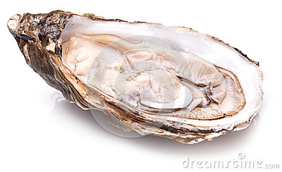 raw-oyster-white-background-52279561.jpg