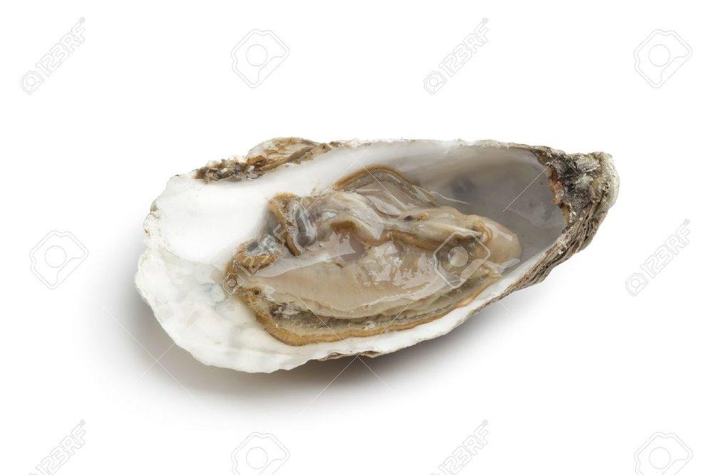 8481804-Solo-ostra-cruda-fresco-en-una-concha-abierta-sobre-fondo-blanco-Foto-de-archivo.jpg