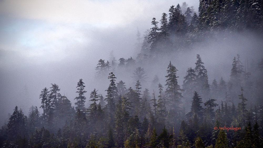 mist in trees.jpg