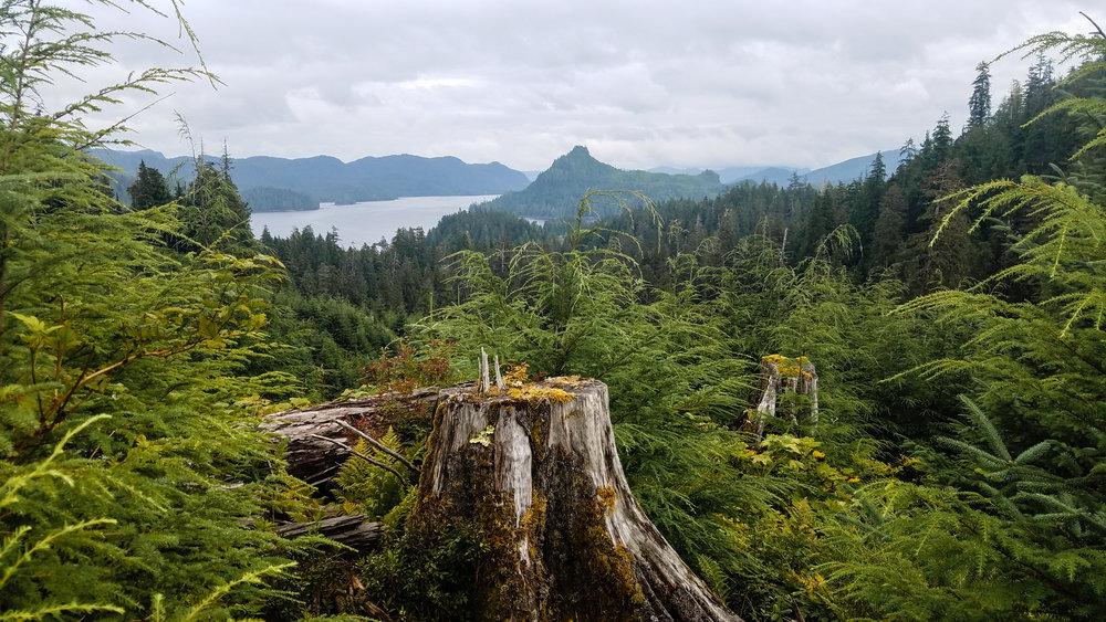 Cholmondeley Sound stumps. Photo by Elsa Sebastian.