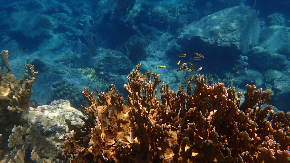 I saw coral catching the sunlight, small fish, rock gardens.