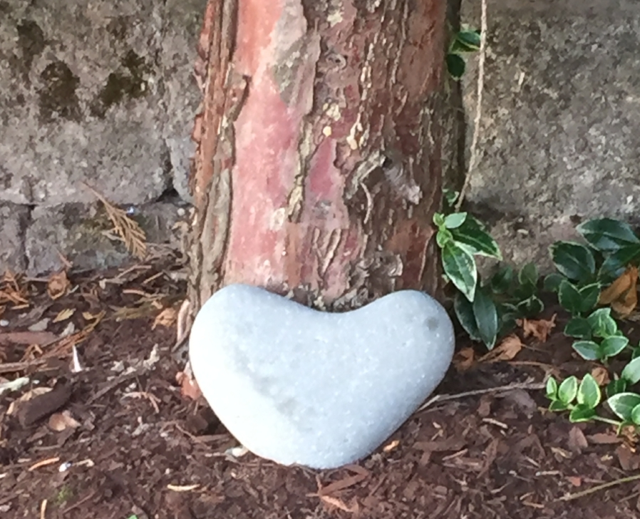 Heart rock at the bottom of a tree sitting on bark.