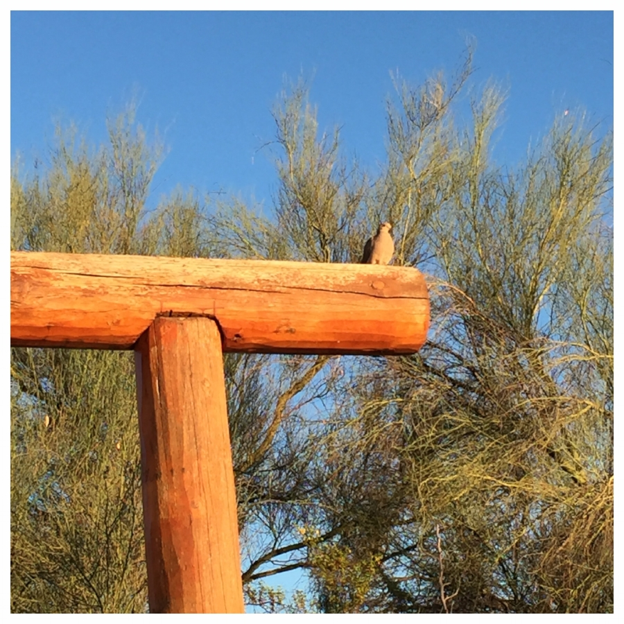A dove sitting on the top of a log fence with a tree in background.
