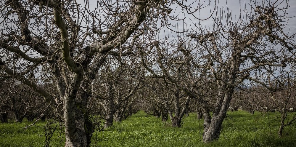 Twin Hill orchard.jpg