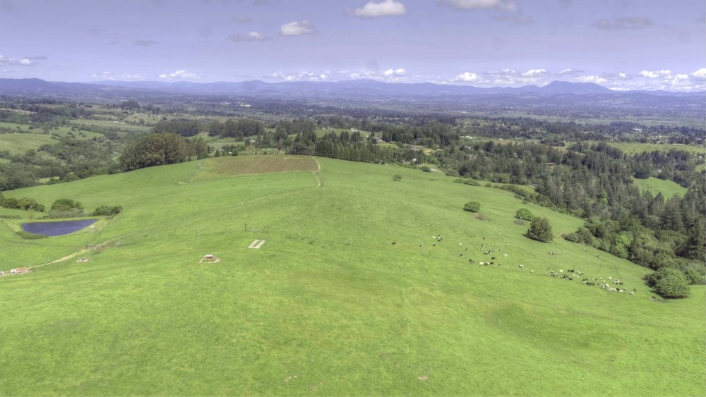 Aerial north view at showing the center of the property with English Hill's vineyard in the distance.