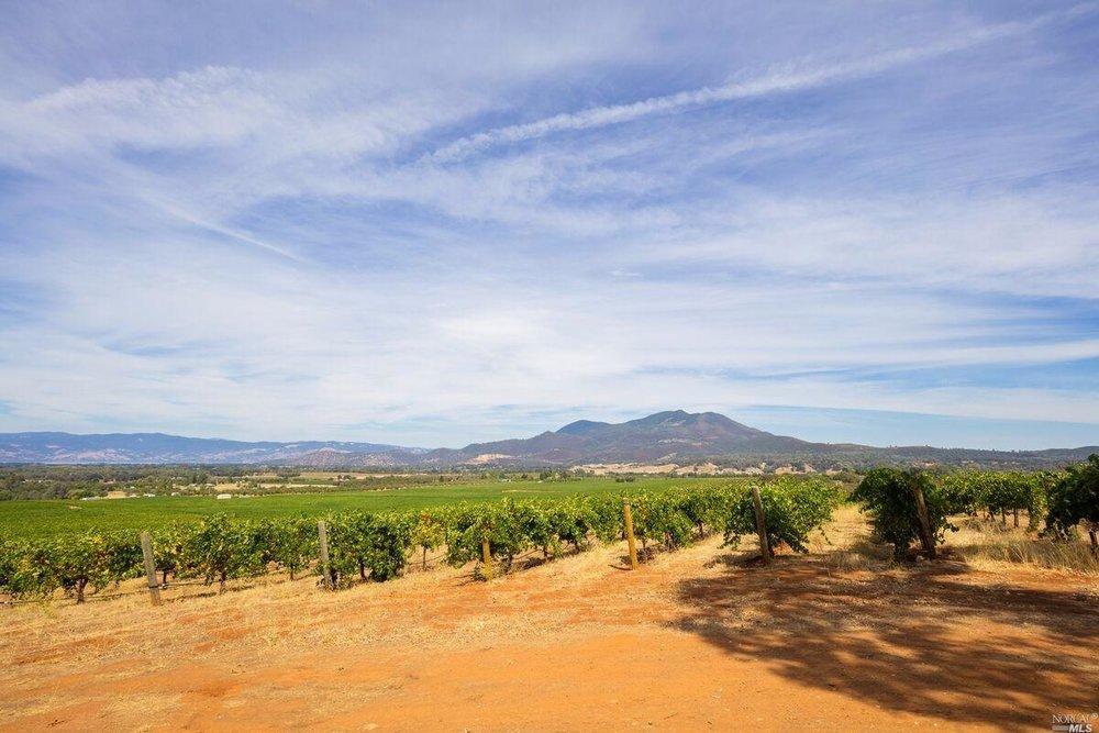 Brandt Ranch Vineyard View 1.jpg