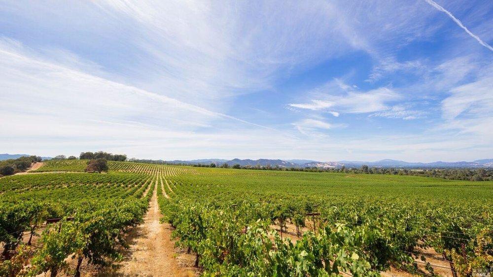 Brandt Ranch Vineyard View 2.jpg