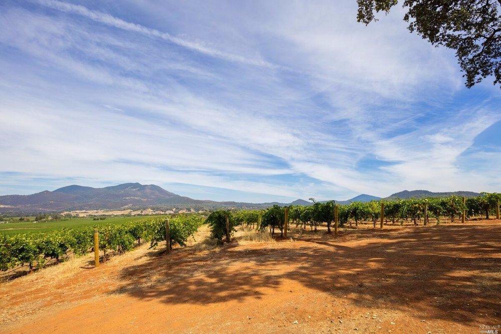 Brandt Ranch Vineyard View 3.jpg